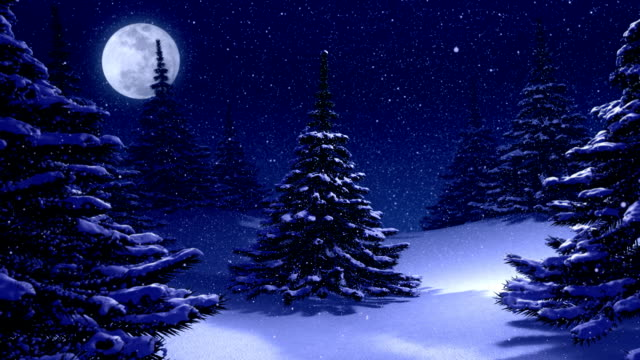 Winter landscape background with pine trees at night. video