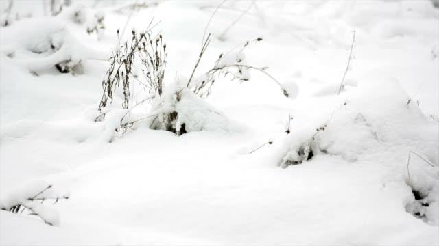 vidéos et rushes de paysage d'hiver en gros plan - prise avec un appareil mobile