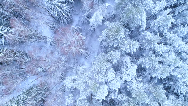 Winter landscape. Forest in the snow from a bird's eye view.