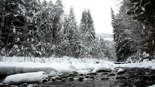 winter landschaft eis schmelzen fluss schwimmende mit schnee bedeckten kiefern auf dem hintergrund wandern - kiefernwäldchen stock-videos und b-roll-filmmaterial