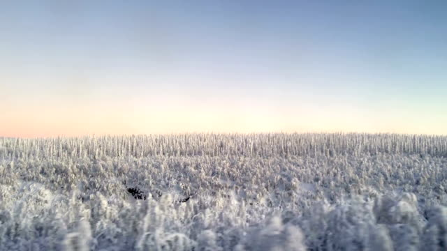 Winter Landscape in Swedish Lapland Kiruna Sweden video