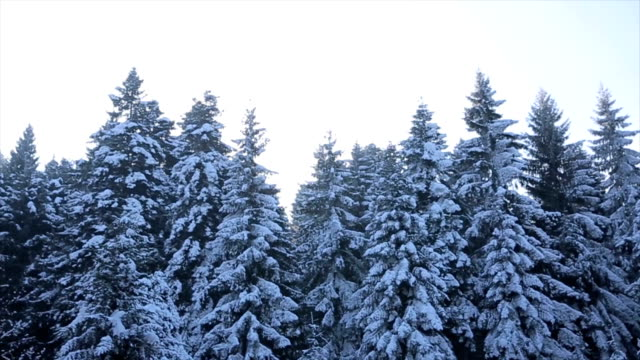 Winter landscape in the forest video