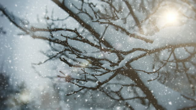 winter landscape | | loopable - snowflake background stock videos & royalty-free footage