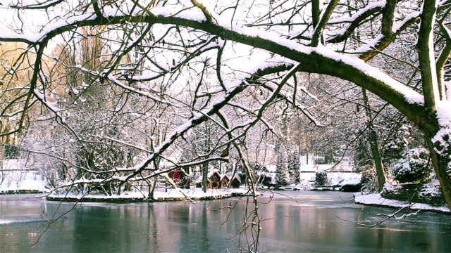 Winter landscape natural beauty : city park after heavy snowfall video
