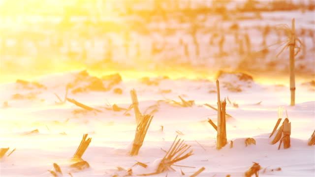 Winter landscape natural beauty : frozen field at sunset video