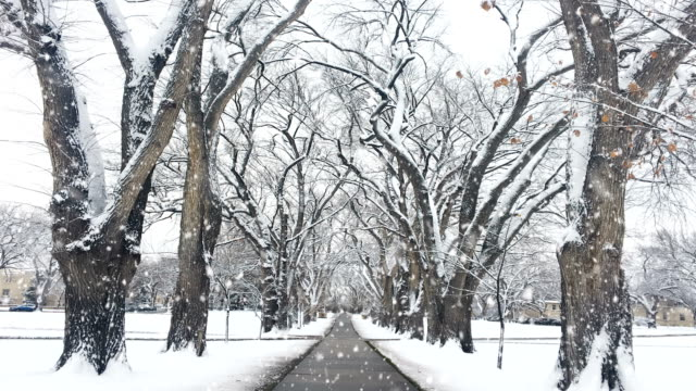 Winter Landscape, Snowing, Seamless Loop