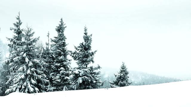 zimowy krajobraz - jodła filmów i materiałów b-roll