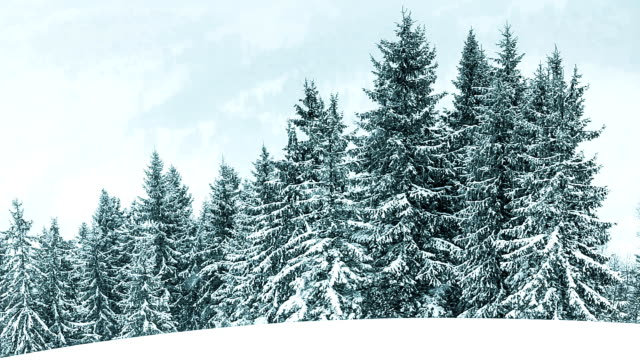 Winter Landscape video
