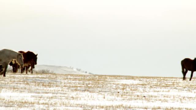 paesaggio invernale - stallone video stock e b–roll