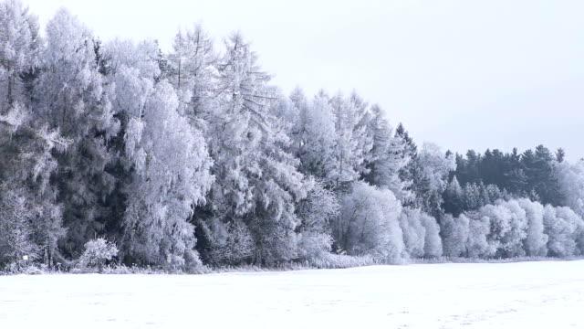 Winter landscape with frozen trees, Czech Republic video