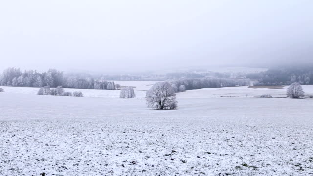 Winter landscape with frozen trees, foggy background video