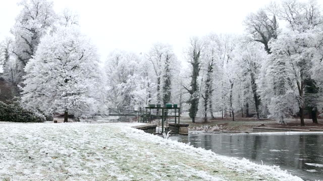 Winter landscape with trees and frozen pond covered with ice video