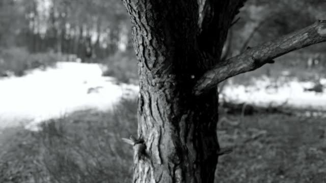 winter landscepe and tree, selective focus - kontrastrik bildbanksvideor och videomaterial från bakom kulisserna