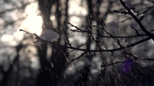 lyrische winterszene mit reflexlicht, eisigen schneefall und apple zweig mit knospen und eisstücke auf der rückseite leicht auf wald oder park oder garten hintergrund. - schneeflocke sonnenaufgang stock-videos und b-roll-filmmaterial