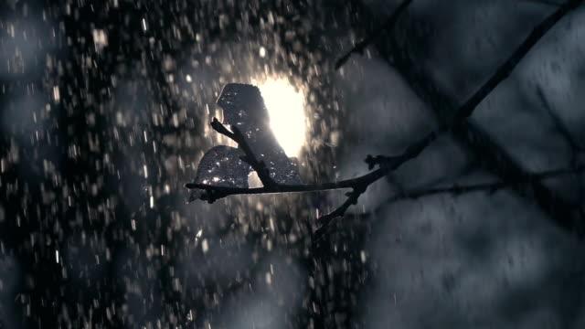 lyrische winterszene mit tiefstehende sonne im rahmen, dichten schneefall und apple zweig mit stück eis auf der rückseite leicht auf wald oder park oder garten hintergrund. - schneeflocke sonnenaufgang stock-videos und b-roll-filmmaterial