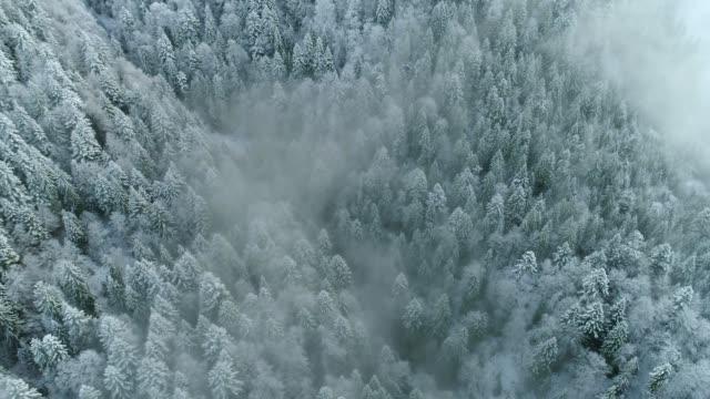 겨울 자연 숲 풍경. 혼합 눈 덮인 나무의 공중 보기. 겨울 배경. 핀란드의 겨울 숲 위의 비행 - mountain top 스톡 비디오 및 b-롤 화면