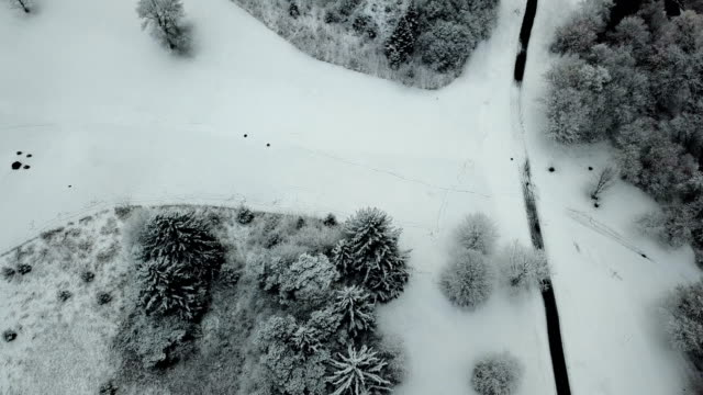 Winter nature in Toronto.