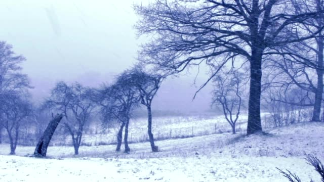 winter orchard, trees video