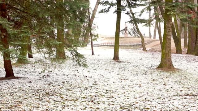 winter park im freien - weißrussland stock-videos und b-roll-filmmaterial