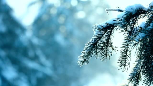 winter park. - barns stock videos & royalty-free footage