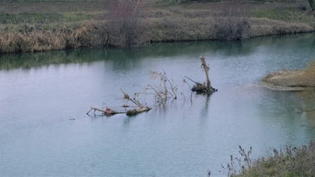 Winter riverside landscape with tree trunks in the middle of the river video