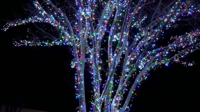 winter season with light illumination on tree at night in winter nagoya, japan. - christmas decoration стоковые видео и кадры b-roll
