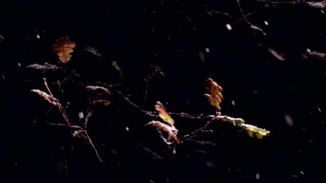 Wintersneeuw vallen vallen bladeren van Burr Oak Tree video