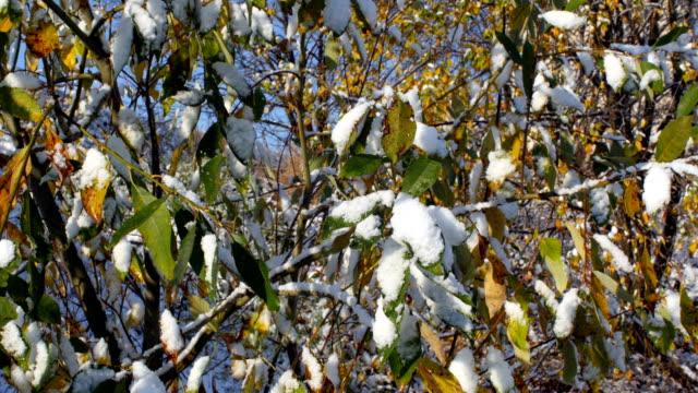 winterschnee auf den blättern - laub winter stock-videos und b-roll-filmmaterial