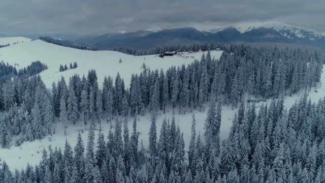 vídeos de stock, filmes e b-roll de voo do zangão do floresta de inverno neve pinho nas montanhas - países bálticos