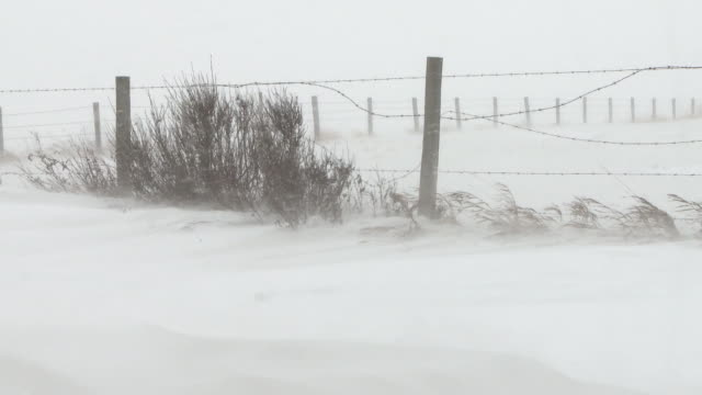 Winter snow storm in the prairies video
