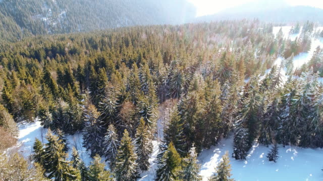 winter snow trees. aerial view fly over. nature - conifera video stock e b–roll
