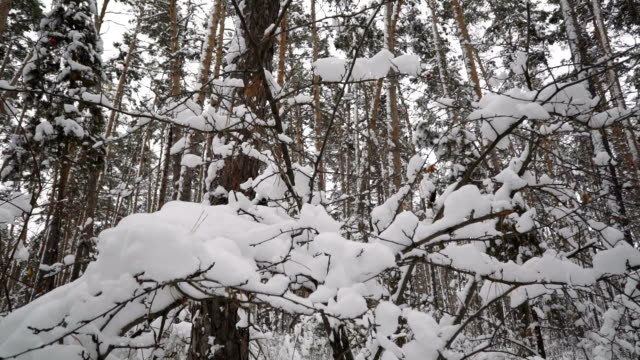 Winter snow-covered forest_10 video