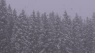 istock Winter Snowfall in the Mountain Pine Forest with Snowy Christmas Trees. Slow Motion 1209140318