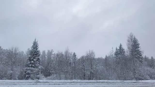 vinter, snöfall. utsikt över motorvägen genom träden. sällsynta lastbilar och bilar kör - biltransporttrailer bildbanksvideor och videomaterial från bakom kulisserna