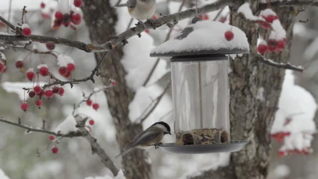 зимние певчие птицы едят семена - кормить стоковые видео и кадры b-roll