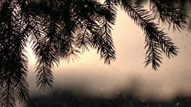sonnigen lyrischen winterszene mit tannengrün und schneefall, sekt auf sonnigen himmelshintergrund in zeitlupe. - schneeflocke sonnenaufgang stock-videos und b-roll-filmmaterial