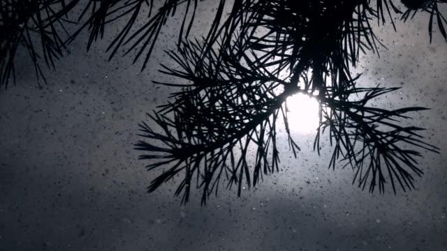 sonnigen lyrischen winterszene mit kiefer zweig, sonne im frame unter sache wolken und schneesturm in zeitlupe. - schneeflocke sonnenaufgang stock-videos und b-roll-filmmaterial