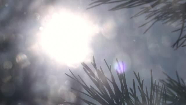 sonnigen winterlandschaft mit tiefstehende sonne im rahmen und lens flare, nadeln von tannenzweigen und schneefall im flachen fokus mit zeitlupe. - schneeflocke sonnenaufgang stock-videos und b-roll-filmmaterial