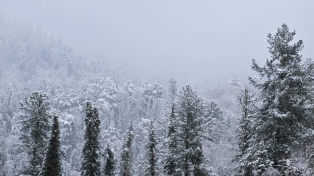 teletskoe 湖の堤防上に重い雪で冬のタイガの森 - シベリア点の映像素材/bロール