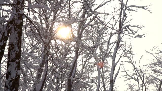 hd-super langsam mo: winter zeit - schneeflocke sonnenaufgang stock-videos und b-roll-filmmaterial