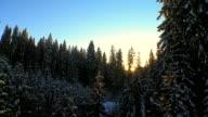 istock Winter Trees At Sunset 480981011