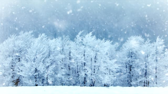 Winter trees in the park. Real falling snow. Slow motion video