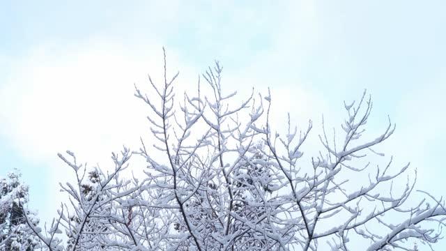 雪が降る冬の木 - 霜点の映像素材/bロール