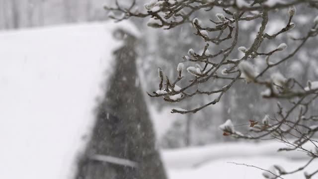 冬の木は雪の富山、,japan - 冬点の映像素材/bロール