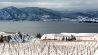 istock Winter Vineyard Okanagan Valley 901997208