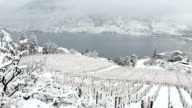 istock Winter Vineyard Okanagan Valley 902002448