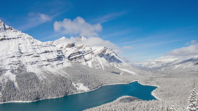 Winter White pine tree Peyto lake Alberta