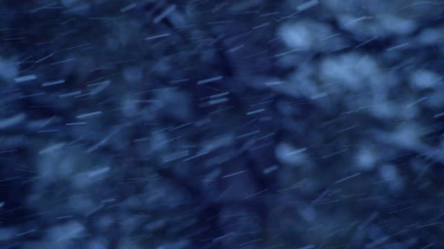Winter wonderland. Snow falling from the sky in a pine trees woodland, dense snowfall, snow covered trees, blizzard