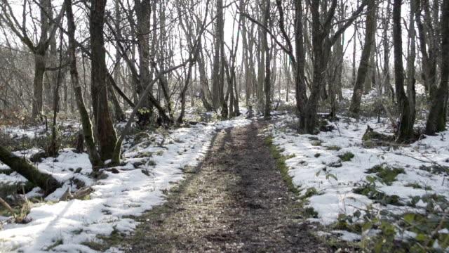 Winter Woodland video
