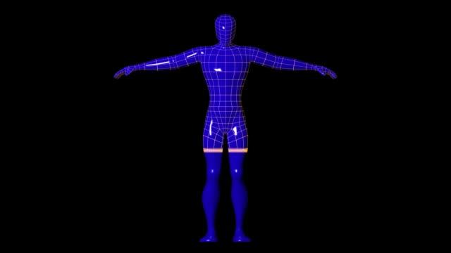 ワイヤ フレーム人間図スキャナー - 医療用スキャン点の映像素材/bロール